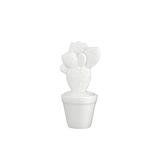 Cactus M.1