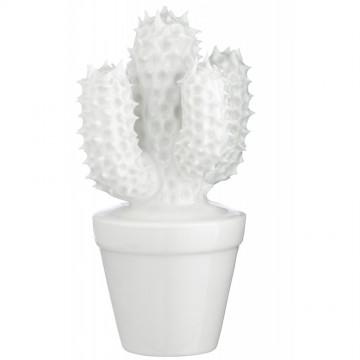 Cactus M.3